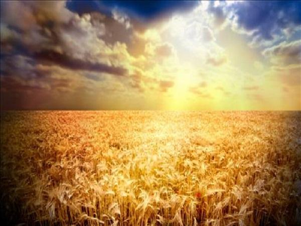 Mơ thấy ánh nắng mặt trời mang điềm báo gì?