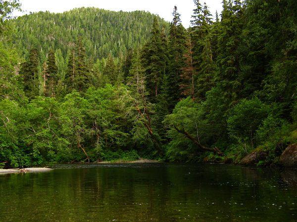Mơ thấy rừng là điềm báo điều gì?
