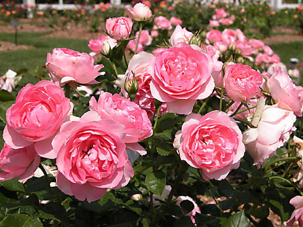Giải mã giấc mơ thấy hoa là điềm báo điều gì?