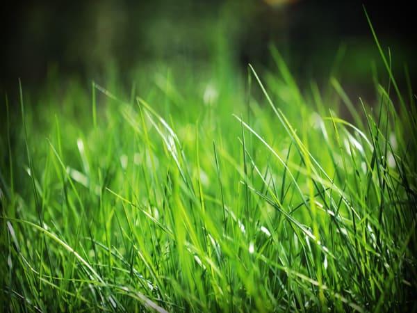 Mơ thấy cỏ là điềm báo lành hay dữ?