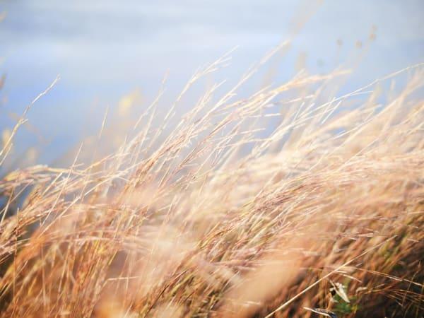 Mơ thấy cỏ khô đánh con gì chính xác?