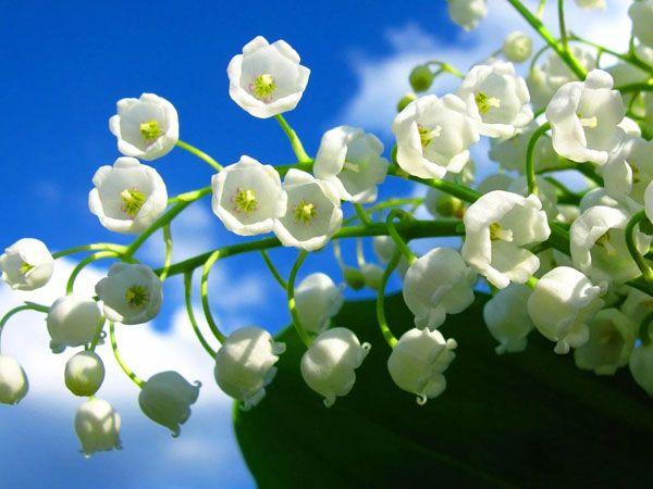 Nằm mơ hái hoa màu trắng là điềm báo điều gì?