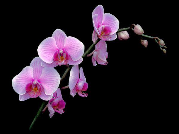 Nằm mơ thấy hoa lan chơi xổ số con gì dễ trúng