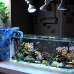 Hướng đặt bể cá cho người mệnh Mộc