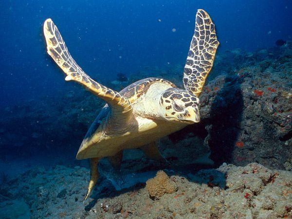 Nằm mơ thấy rùa có ý nghĩa gì điềm báo may mắn hay xui xẻo