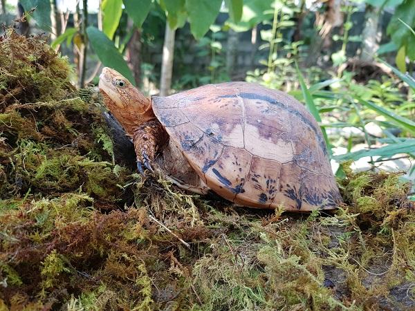 Giải mã giấc mơ thấy con rùa điềm báo gì?